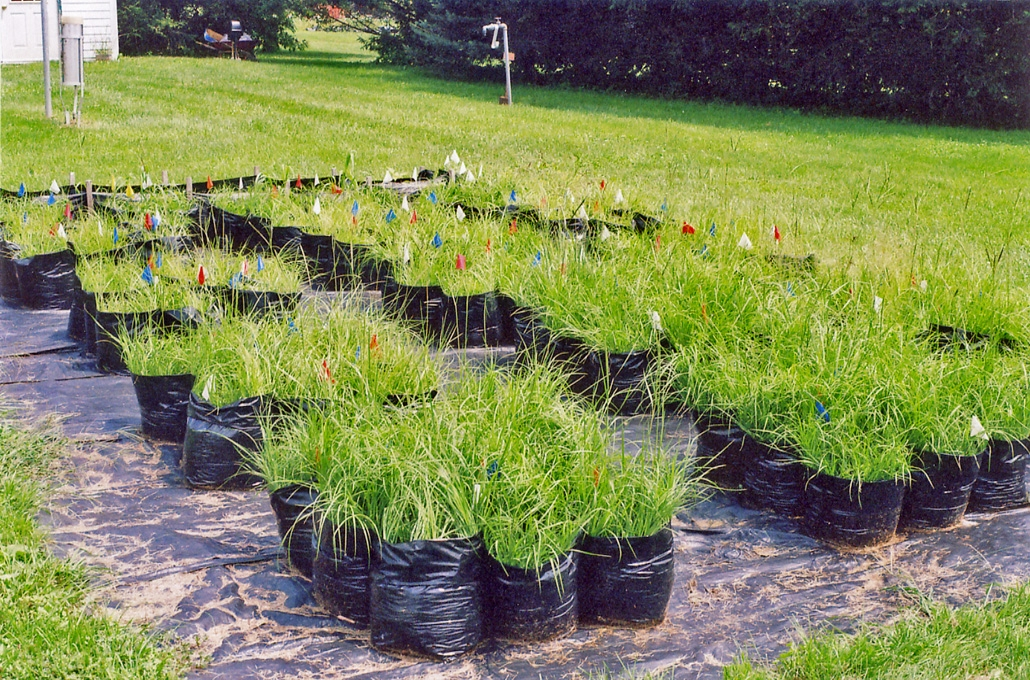 On-farm production of AM fungal inoculum using Bahiagrass
