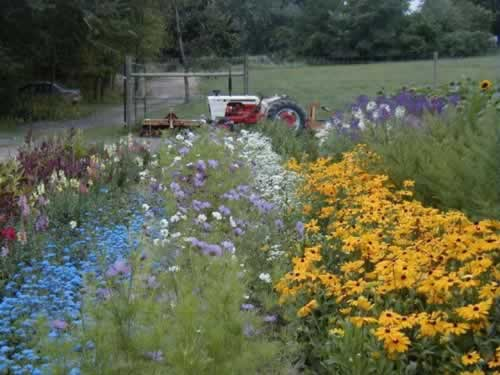 Lots of flowers planted and blooming on a small farm