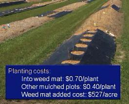 establishment costs for planting