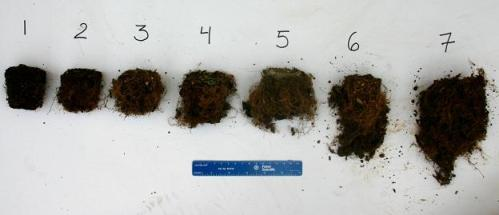 greenhouse experiment of potted blueberry grown with different composts, root ratings