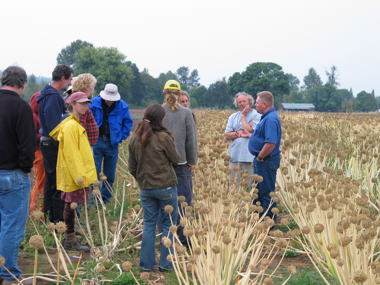 Joel Reiten leads organic onion seed field day at Bejo Seeds, Corvallis, Oregon. Photo credit: Micaela Colley