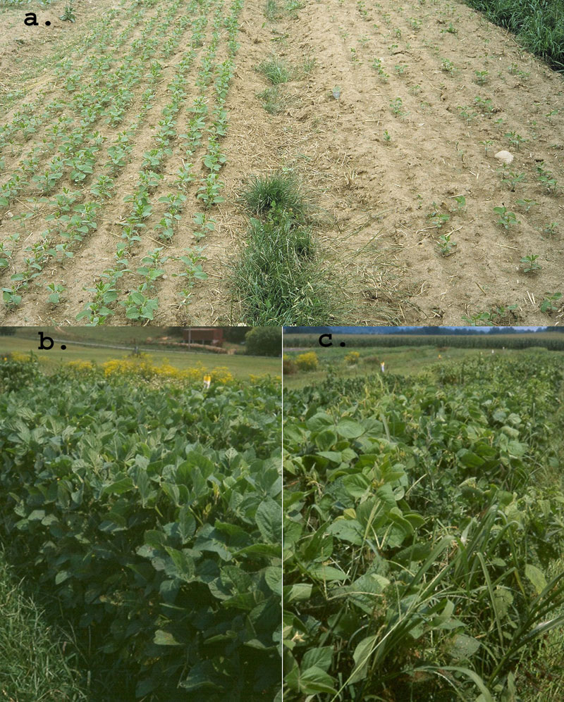 Good vs poor soybean quality