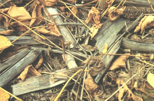 Corn and soybean residues