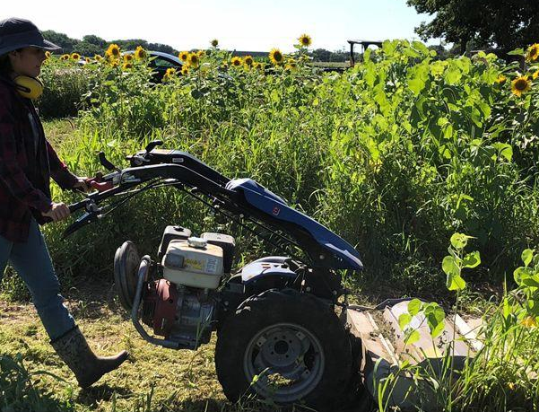 Cover crop termination with BCS mower